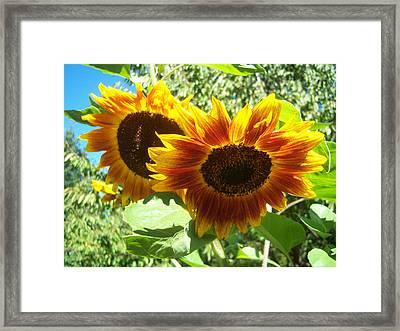 Sunflower 115 Framed Print by Ken Day