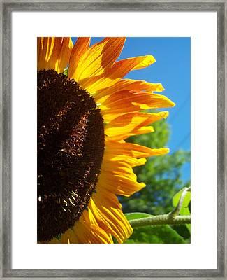Sunflower 139 Framed Print by Ken Day
