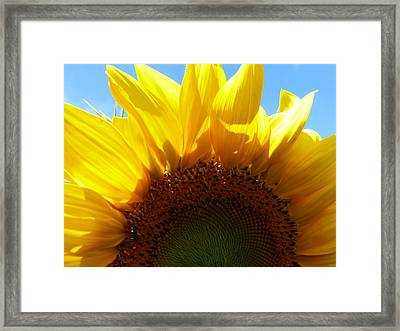 Sunflower 2015 8 Framed Print by Tina M Wenger