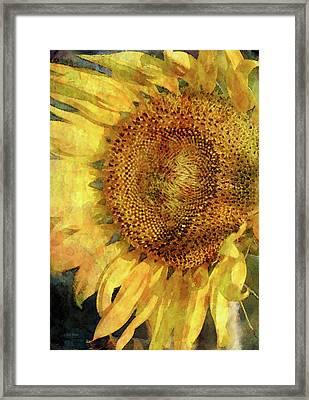 Sunflower 2254 Idp_2 Framed Print
