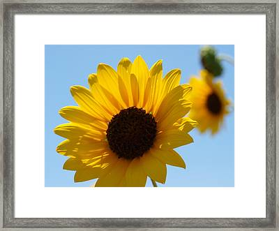 Sunflower 4 Framed Print by James Granberry