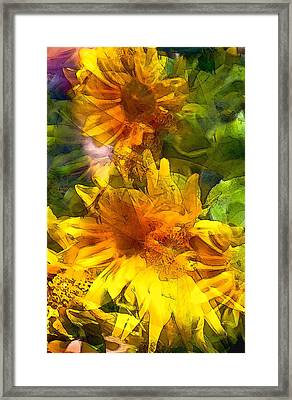 Sunflower 6 Framed Print by Pamela Cooper