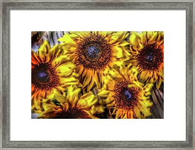 Sunflower Abstract Framed Print by Garry Gay