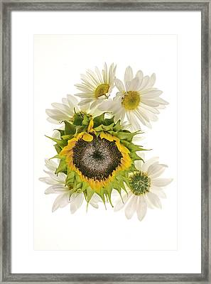 Framed Print featuring the photograph Sunflower And Daisies by Roman Kurywczak