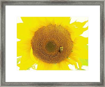Sunflower And The Happy Bee Framed Print
