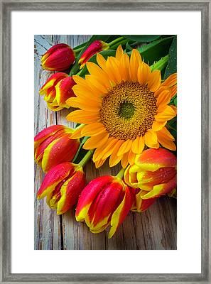 Sunflower And Tulips Framed Print