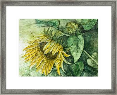 Sunflower At Dusk Framed Print by Sandy Clift