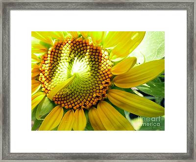 Sunflower At Snickerhaus Garden Framed Print by Christine Belt