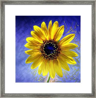 Sunflower Azul Framed Print