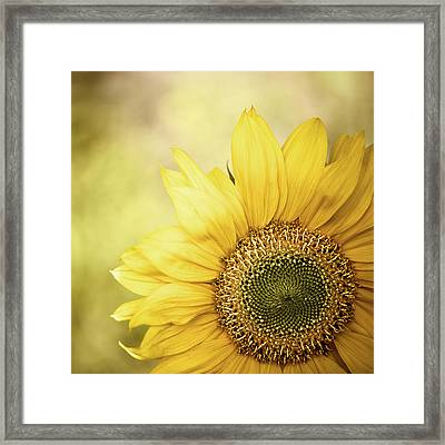 Sunflower Blossom With Bokeh Background Framed Print by Elisabeth Schmitt
