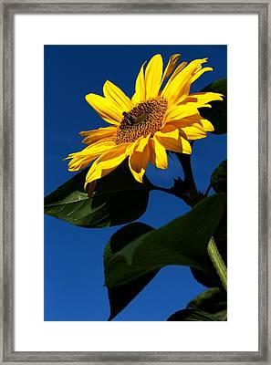 Sunflower Breakfast 1. Just Arrived  Framed Print by Rusalka Koroleva