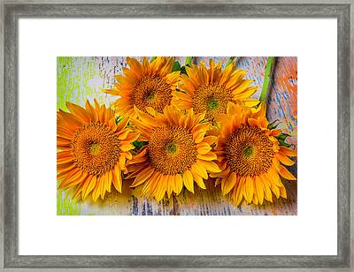 Sunflower Bunch Framed Print by Garry Gay