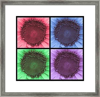 Sunflower Centered Color Collage 4 Framed Print