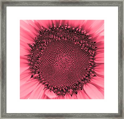 Sunflower Centered Red Framed Print