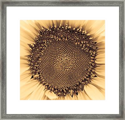 Sunflower Centered Pale Yellow Framed Print