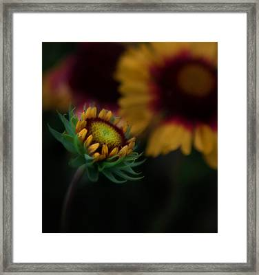 Sunflower Framed Print by Cherie Duran