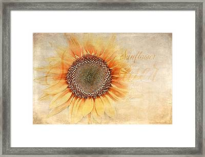 Sunflower Classification Framed Print