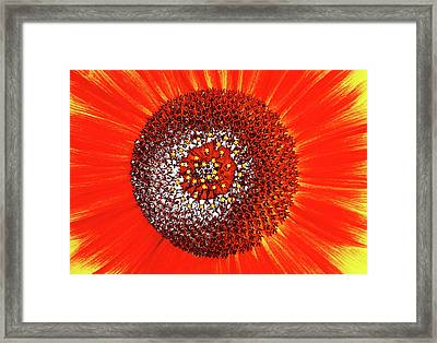 Framed Print featuring the photograph Sunflower Close by Roger Bester