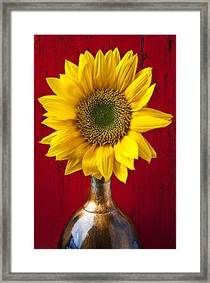 Sunflower Close Up Framed Print by Garry Gay