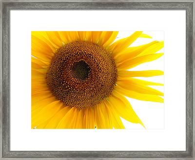 Sunflower Close-up Framed Print by Tony Ramos