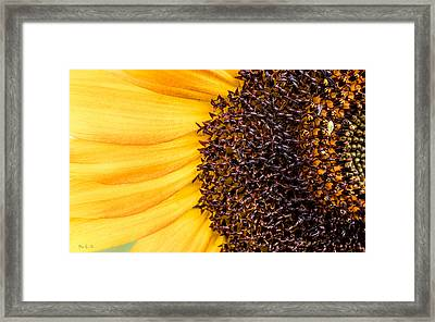 Framed Print featuring the photograph Sunflower Closeup by Bob Orsillo