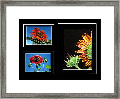 Framed Print featuring the photograph Sunflower Collage by Joyce Dickens