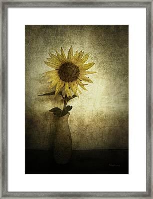 Sunflower Framed Print by Cynthia Lassiter