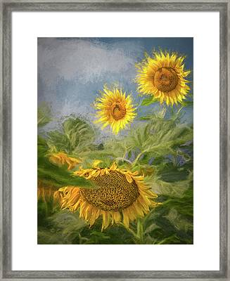 Sunflower Dance Framed Print