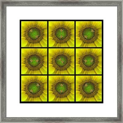 Sunflower Dance Ill Framed Print by Doug Kreuger