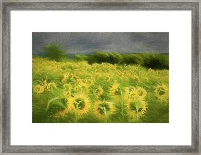 Sunflower Dancers Framed Print