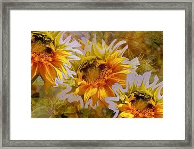 Sunflower Delight Framed Print