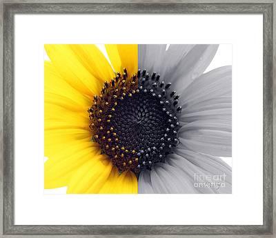 Sunflower Equinox Framed Print