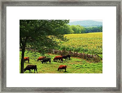 Framed Print featuring the photograph Sunflower Farm by John Scates