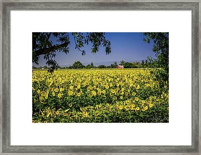Sunflower Farm Framed Print
