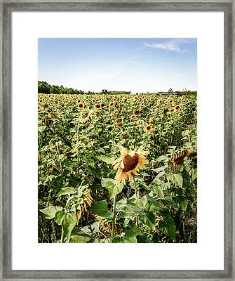 Framed Print featuring the photograph Sunflower Field by Alexey Stiop
