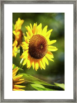 Framed Print featuring the photograph Sunflower Field by Christina Rollo