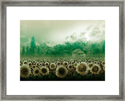 Sunflower Field Green Framed Print by Bekim Art