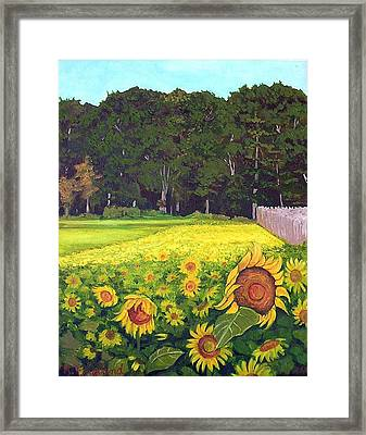 Sunflower Field Framed Print by Hilary England
