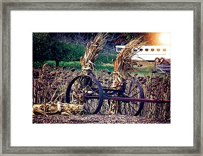 Sunflower Field Wilting In The Sunset Framed Print
