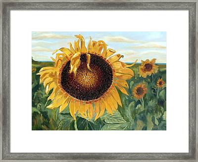 Sunflower Fields Forever  Framed Print by Maria Soto Robbins