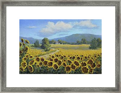 Sunflower Fields Framed Print