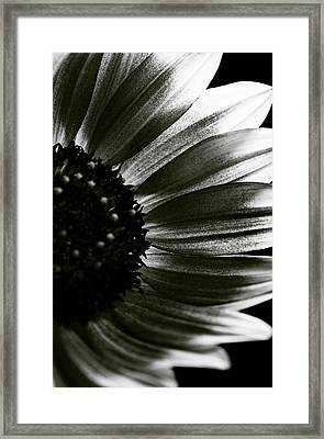 Sunflower Framed Print by Fine Arts