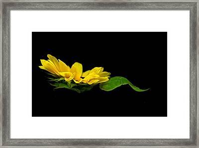 Sunflower Float Framed Print by Elsa Marie Santoro