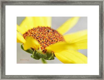 Sunflower Flowers Framed Print