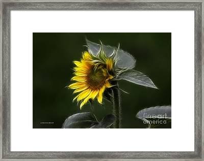 Sunflower Fractalius Beauty Framed Print