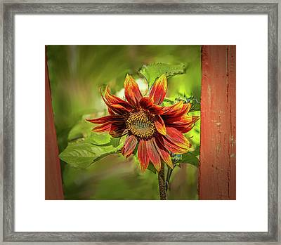 Sunflower #g5 Framed Print