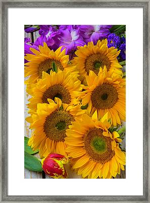 Sunflower Gathering Framed Print by Garry Gay