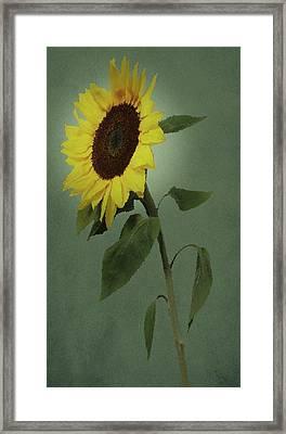 Sunflower Glow Framed Print