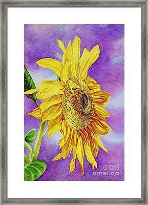Sunflower Gold Framed Print