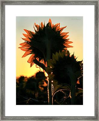 Framed Print featuring the photograph Sunflower Greeting  by Chris Berry